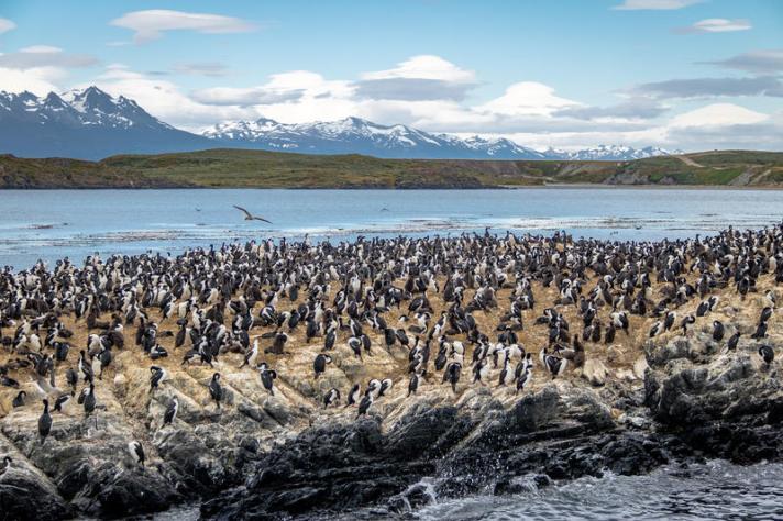 ilha-de-pc3a1ssaros-do-mar-dos-cormorc3b5es-canal-do-lebreiro-ushuaia-argentina-94942695